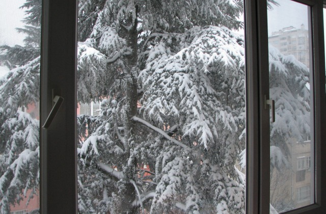 Pine tree covered with snow. View from inside a house.