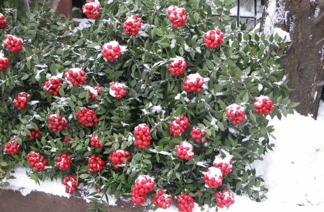 Popular winter flowers in Istanbul.